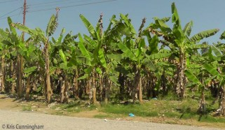 We saw some bananas but nothing like what I expected after reading about the many banana plantations.