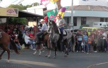 Most Panamanian horses are rather small, but this gray one was quite big.