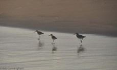 Birds on the sand