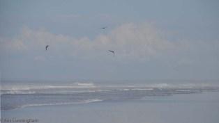 Frigate birds circle overhead.