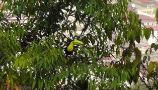 A toucan!