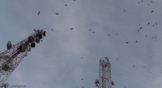 There were lots of vultures at the top of the hill and perched on the towers.