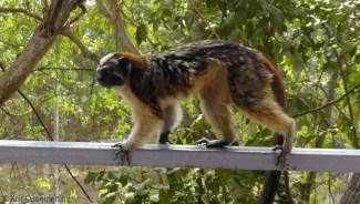 monkey13