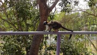 monkey15