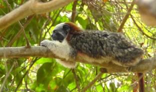 monkey19