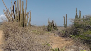 It was dry with many cactus up here too.
