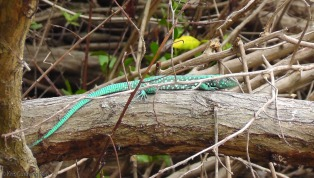 We had a great time photographing these beautiful lizards.