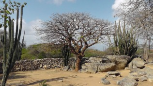 An interesting tree, and lots of cactus.