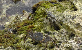 There were the coolest crabs at the edge of the water!