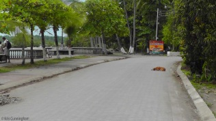 This is one of the few paved roads and the main road along the water. This pretty much sums up the pace of the town, this dog sleeping in the road. People just drove or biked around him.