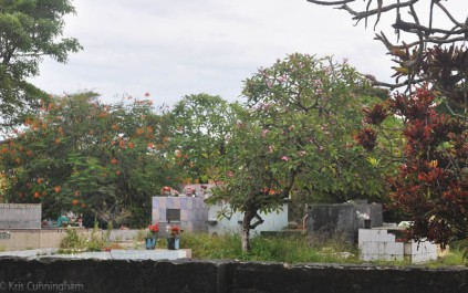 There is a fair amount of rain in this area so the cemetery had plenty of green along with the many flowering trees.