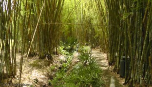 This walkway through the bamboo looked beautiful