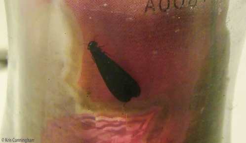 This bug was in the money glass where I could catch a photo.