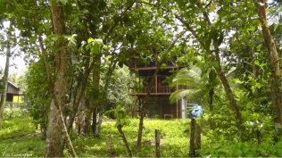Interesting house back in the jungle