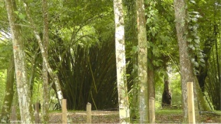 These clumps of bamboo were huge!