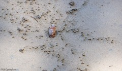 There are lots of crabs and hermit crabs in the sand.