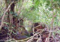There was a stream flowing through the forest the went out to the larger river.