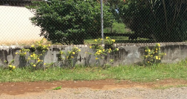 An interesting wall with some pretty yellow flowers, and a baby iguana.