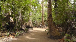 There were lots of coconut trees on this part of the path