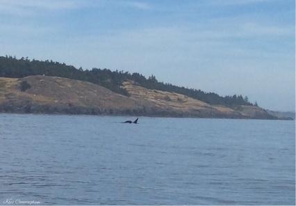 ORCA!