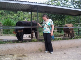 Cedo thought if I took her picture with cows, it was only fair that she took my picture with cows too.