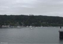 As we pull into Bainbridge Island, I see all these tiny sailboats. Sailing class?