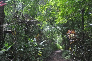 The jungle was very lush and green, and surprisingly cool under the trees.