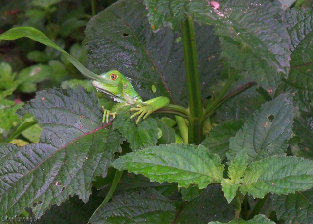 I walked towards the woods behind our house and saw this little guy hanging out on a plant. He was nice enough to wait while I dashed to the house for a camera (I know, I know, never go anywhere without a camera!)