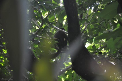 Wow, first glimpse of a monkey!