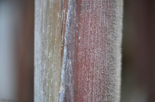 We have some tall cane grass along the fence, but if you look closely at the stalks with a macro lens they look like velvet.