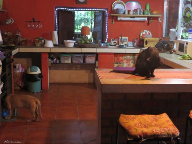 And another day begins! Everyone is in the kitchen at once which is unusual, especially for Ocho. (Look closely and you'll see the third cat heading out the window)