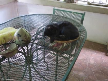 I think I'll sleep in the basket