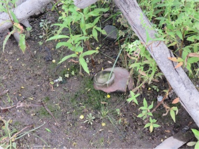 One of the pottery pieces that Joel spotted laying right out in the open.