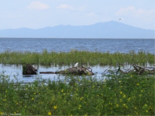 We also spotted a few egrets