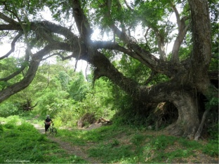 There is no end of amazing trees