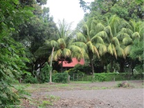The house is nestled among a lot of huge trees