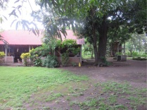 A bit of the side yard and the casita. The mango trees are huge!