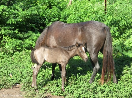 As we got close to the house, we passed the mare and her baby by the side of the road.