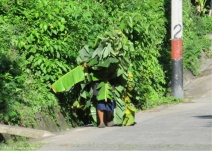 We saw this crazy sight on the road that looked like a moving banana tree! A neighborhood kid who visited this morning explained that they were probably picking leaves for tamales.