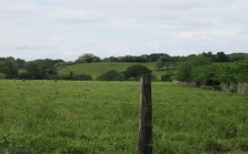 The route continues to go through beautiful green fields with cows, and green hills.