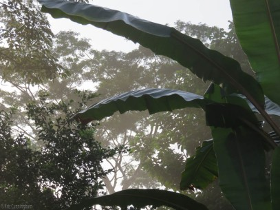 A misty, early morning in my back yard, David, Panama