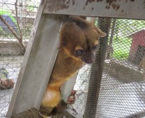 The little kinkajou was woken up and taken out of his sleeping box.