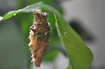 When I first saw it I thought it was a cocoon.
