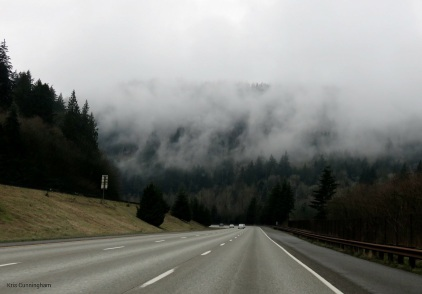 We head towards the mountains where the trees are shrouded in fog and clouds.