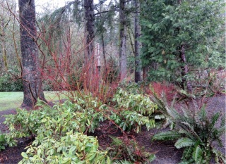 Many plants don't have leaves at this time of year but they have colorful stems
