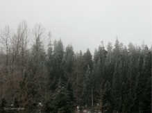 The trees are covered with frost