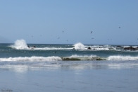 More waves and pelicans