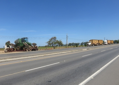 There is a great new road with wide shoulders that make perfect bike lanes. Here they were getting ready to harvest sugar cane.