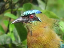 Joel got this fantastic shot of the wet motmot!