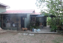 The back yard, with a comfortable shading sitting area (we had run off with the chairs to sit by the chicken house). The dog is Brownie, a sweet and friendly dog. Things look a bit brown because it's the end of the dry season but when the rains return the grass will be green again. Not shown - the most recent arrivals, some baby chicks in an enclosure at the back of the yard. In a few months they should start providing eggs.